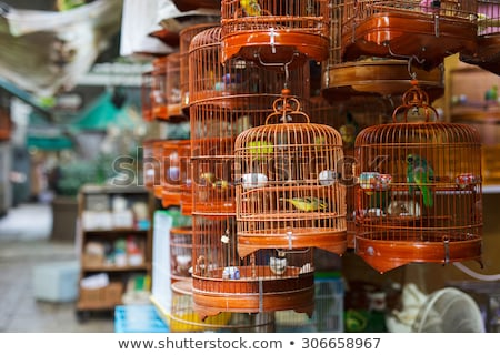 birds in a cage at the birds market in Hongkong Stock photo © meinzahn