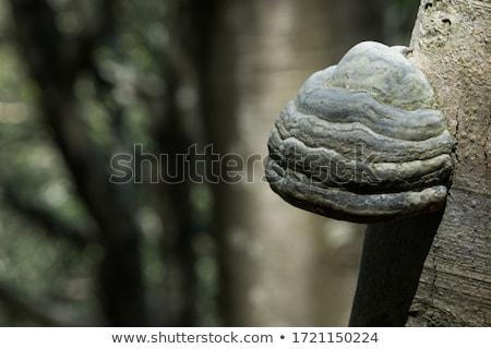 菌 · ツリー · 自然 · 風景 - ストックフォト © emese73