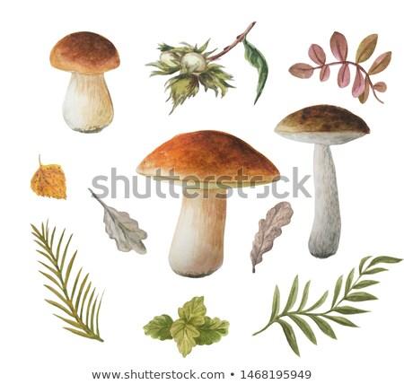 Stock photo: Oak mushrooms