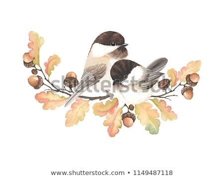 Vogels najaar boom vector regenachtig vergadering Stockfoto © beaubelle