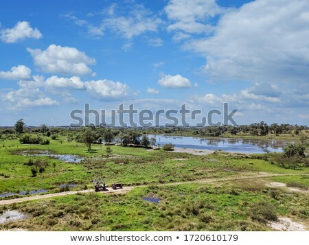 green swamp and reeds under cloudy sky stock photo © mycola