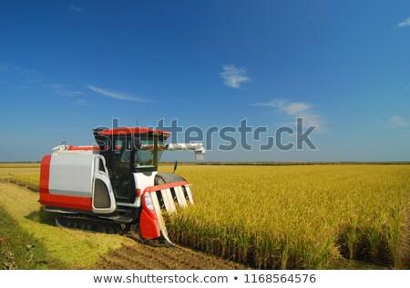 Farm worker harvesting rice with Combine machine Stock photo © Witthaya