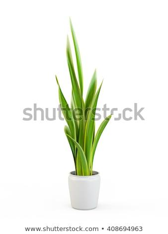 緑の葉 · 外に · ウィンドウ · 表示 · 家 · ツリー - ストックフォト © michaklootwijk