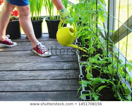 Légumes maison Creative paysage organique légumes Photo stock © FOTOYOU
