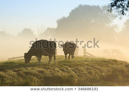 Misty Morning Meadow stock photo © Luseen