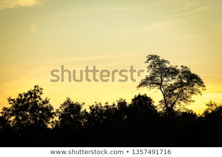 naplemente · mögött · fák · este · tájkép · nap - stock fotó © rghenry