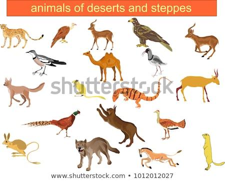 steppe fox Stock photo © njaj