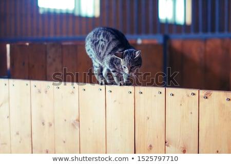 Cute kitten standing and looking down  Stock photo © wavebreak_media