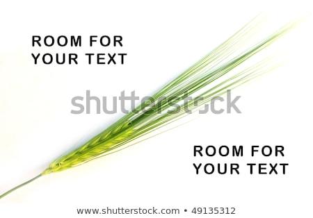 verde · mais · vento · fiore · primavera · luce - foto d'archivio © meinzahn