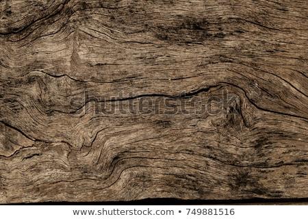Grunge eski ahşap doku bo ağaç Stok fotoğraf © clarusvisus