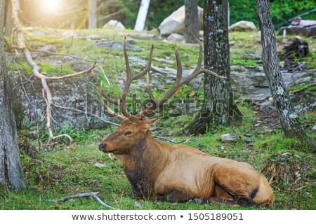 Közelkép fej piros park állat játék Stock fotó © markdescande