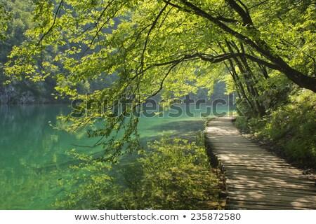 болото · природы · тропе · пути · рано - Сток-фото © juhku