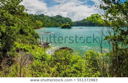 beach and forest manuel antonio costa rica stock photo © juhku