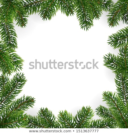 Xmas Border With Fur Tree Stock photo © barbaliss