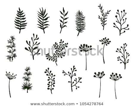 tropische · palmblad · grens · vector · zomer · palmboom - stockfoto © gladiolus