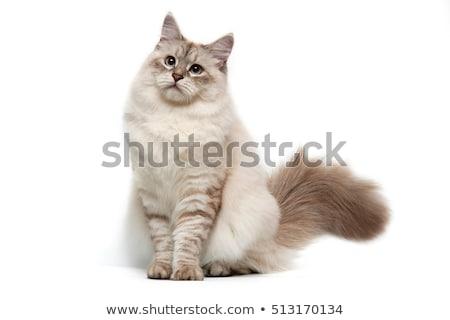 sevimli · küçük · Evcil · karikatür · örnek · ayarlamak - stok fotoğraf © bluering