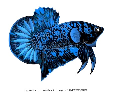 Cartoon bleu poissons isolé blanche Photo stock © Lady-Luck