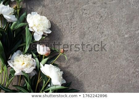 Buquê belo rosa cinza concreto cópia espaço Foto stock © artjazz