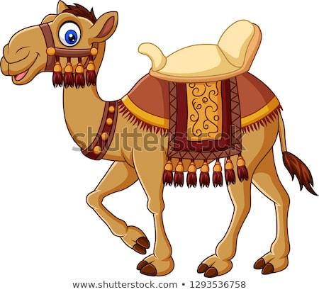 Camello carácter Cartoon ilustración funny Foto stock © izakowski