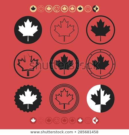 Juhar levelek szimbolikus izolált ikon szett vektor Stock fotó © robuart