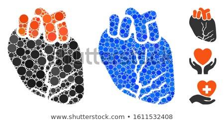 Emberi szív ikon árnyék kék kör Stock fotó © Imaagio