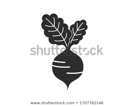 Radijs icon vector ontwerp symbool plantaardige Stockfoto © blaskorizov