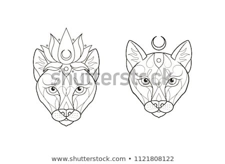 Stok fotoğraf: Set Of Female Lion Character