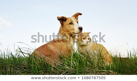 cat on background of green grass Stock photo © serg64