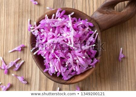 frescos · púrpura · flores · cuchara · cuchara · de · madera · flor - foto stock © madeleine_steinbach