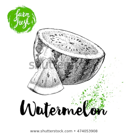 Watermelon Sketches Stock photo © sifis