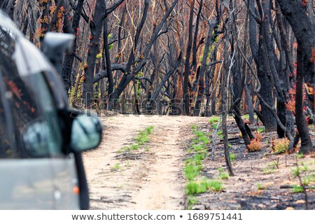 Driving through burnt bush land after summer fires Stock photo © lovleah