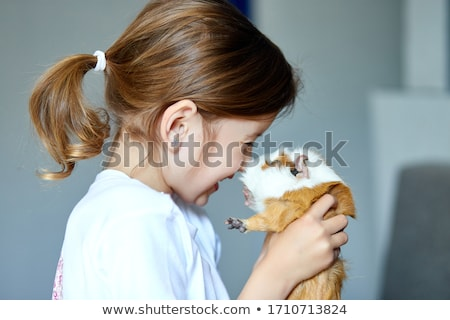 Child playing with guinea pig, stay quarantine time kid home. Stock photo © Illia