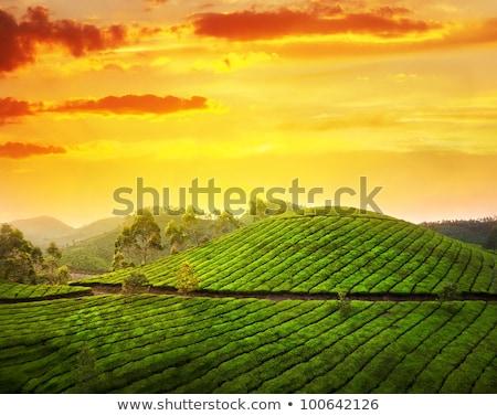 Weg thee Indië schilderachtig groene thee landschap Stockfoto © dmitry_rukhlenko