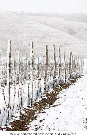 winter vineyards eko hnizdo czech republic stock photo © phbcz