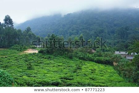 Autour forêt Ouganda paysages Afrique Photo stock © prill