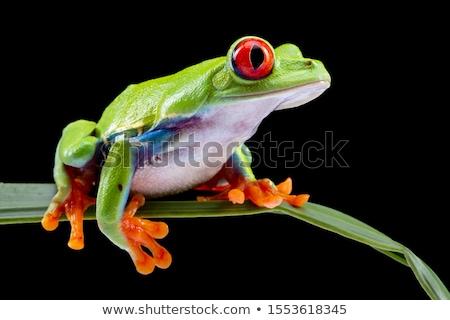zöld · béka · szem · természet · piros · kő - stock fotó © BrunoWeltmann