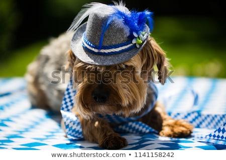 такса · Октоберфест · счастливым · Cartoon · собака · Hat - Сток-фото © dazdraperma