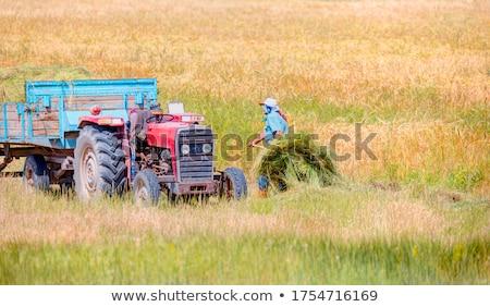 фермер · подсолнечника · области · завода · цветок - Сток-фото © photography33