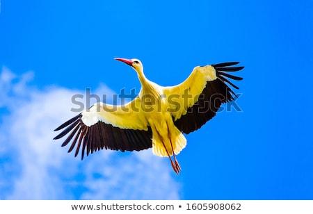 небе весны птиц черный белый крыльями Сток-фото © mobi68