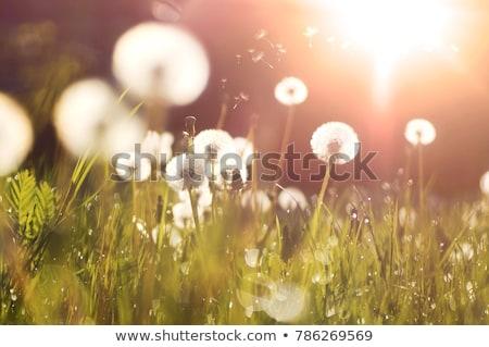 Stockfoto: Stralen · zonlicht · zonsondergang · laatste · wolken