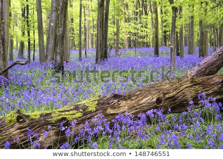 tapete · azul · flores · primavera · floresta · panorama - foto stock © unikpix