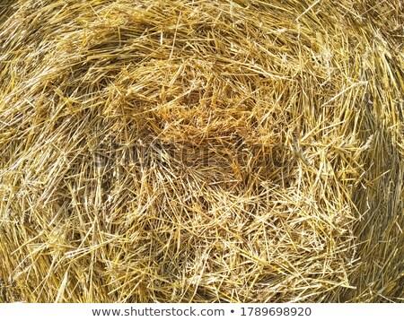 Yellow straw round bale, macro texture background Stock photo © lunamarina