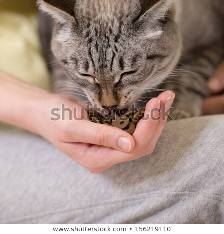 unrecognizable woman feeding her tabby cat at home stock photo © hasloo