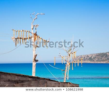風 魚 典型的な 島々 ビーチ ストックフォト © lunamarina