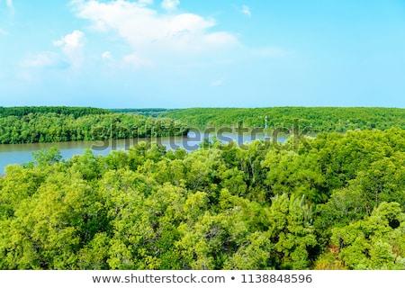 Mangrove forest and mountain Stock photo © smithore