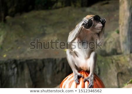 обезьяны Солнцезащитные очки дерево туристических храма Бали Сток-фото © Komar