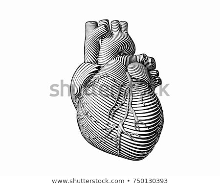 эскиз человека сердце Vintage стиль вектора Сток-фото © kali