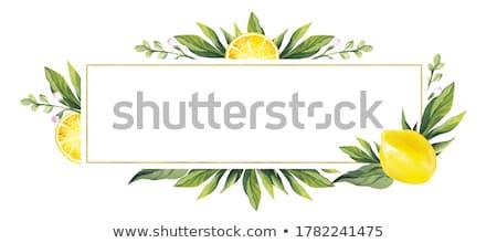 装飾的な · フルーツ · 場所 · 文字 · 自然 · 葉 - ストックフォト © elenapro