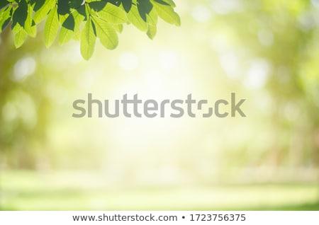 mundo · hojas · eco · planeta · ilustración · agua - foto stock © alexmillos