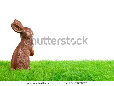 Chocolate easter bunny over white Stock photo © lucielang